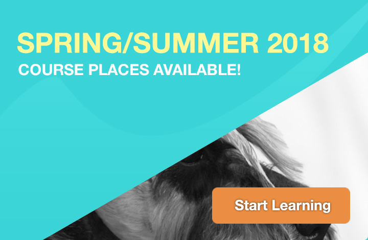 City Guilds Dog Grooming Courses