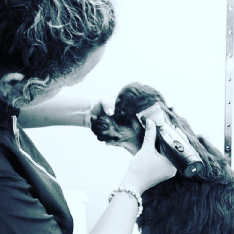Dog Grooming College Courses West Midlands
