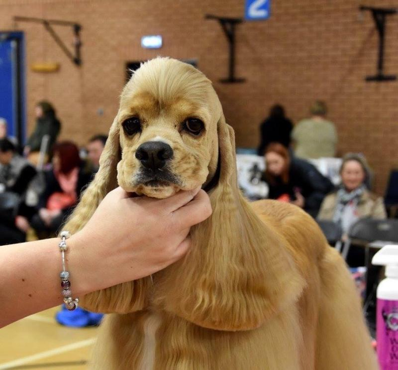Level  Qualification In Dog Grooming