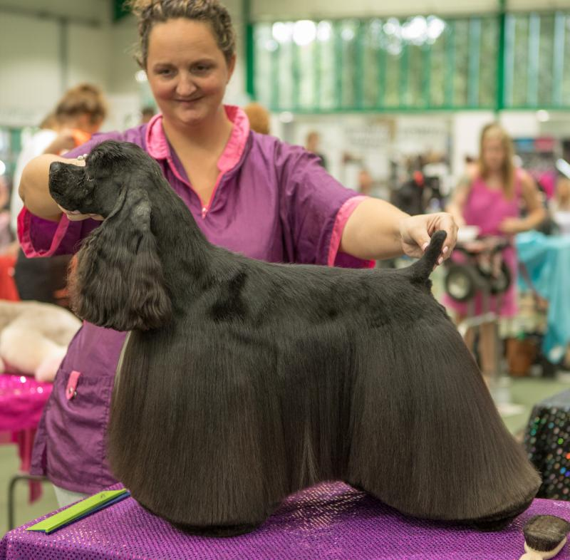 1 Day Dog Grooming Masterclass