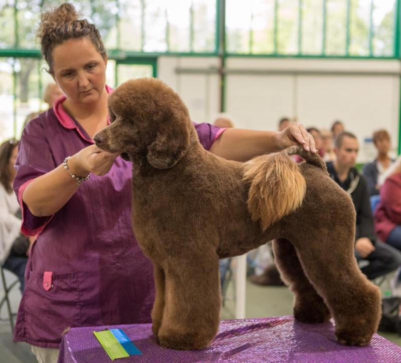 Ocn City And Guilds Dog Grooming Courses