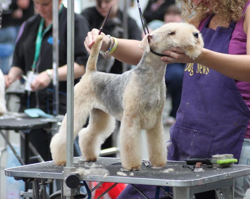 6 Day Dog Grooming Course